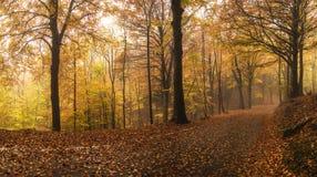 Herbstfarben Lizenzfreie Stockbilder