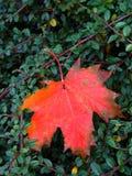 Herbstfarben Stockbilder