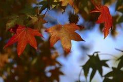Herbstfarben 9 Lizenzfreies Stockfoto