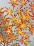 Herbstfarben 9 Stockfotografie