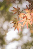 Herbstfarben 9 Lizenzfreies Stockbild