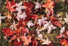 Herbstfarben 7 Stockfotos