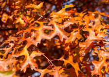 Herbstfarben 5 Lizenzfreies Stockfoto