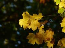 Herbstfarben in den Bäumen Stockbild