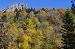 Herbstfarben in den Mischwäldern von Posets-Maladetanaturpark, Spanisch Pyrenäen Lizenzfreies Stockfoto