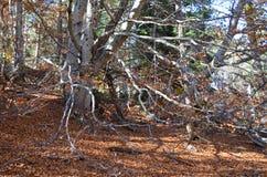 Herbstfarben in den Mischwäldern von Posets-Maladetanaturpark, Spanisch Pyrenäen Lizenzfreie Stockfotos