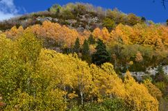 Herbstfarben in den Mischwäldern von Posets-Maladetanaturpark, Spanisch Pyrenäen Stockbild