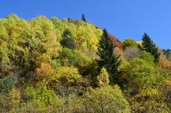 Herbstfarben in den Mischwäldern von Posets-Maladetanaturpark, Spanisch Pyrenäen Stockfotos