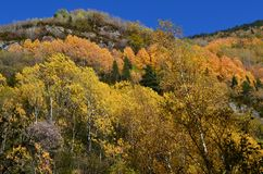 Herbstfarben in den Mischwäldern von Posets-Maladetanaturpark, Spanisch Pyrenäen Lizenzfreies Stockbild