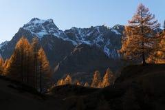 Herbstfarben in der Devero-Alpe Lizenzfreie Stockfotografie