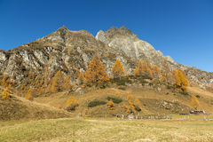 Herbstfarben in der Devero-Alpe Stockfoto