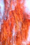 Herbstfarben der Mandschukirsche Stockfotos