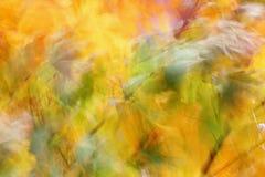 Herbstfarben des Ahorns Stockfotografie