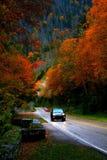 Herbstfarben des Baums Lizenzfreie Stockbilder