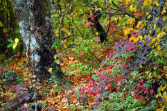 Herbstfarben durch das Wasser Lizenzfreie Stockfotos