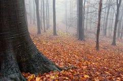 Herbstfarben in einem orange Wald mit Nebel zwischen Stockbild