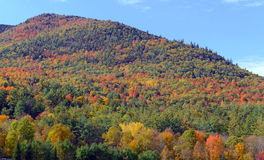 Herbstfarben - Fall verlässt im Adirondacks, New York Lizenzfreies Stockfoto