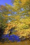 Herbstfarben - Fall verlässt im Adirondacks, New York Lizenzfreies Stockbild