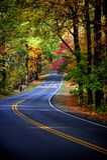 Herbstfarben im Wald Stockfoto
