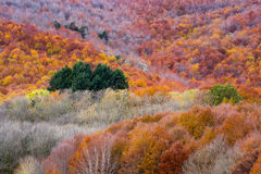 Herbstfarben im Wald. Montseny, Spanien. Lizenzfreies Stockfoto