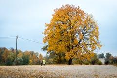 Herbstfarben in Lettland stockfoto