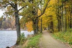 Herbstfarben in Lettland lizenzfreie stockfotos