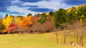 Herbstfarben in Nara Stockfoto