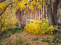 Herbstfarben und alte Scheune stockbild