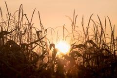 Herbstfarben und -blätter Stockfoto