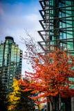Herbstfarben, Vancouver Lizenzfreies Stockbild