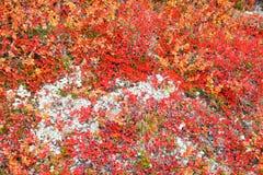 Herbstfarbenpalette in der Natur Lizenzfreie Stockfotos