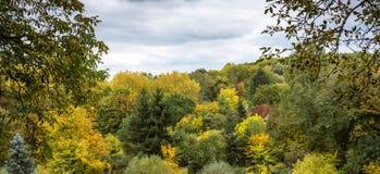 Herbstfarbwald Stockfotos