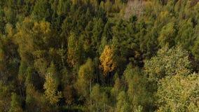 Herbstfarbwald, Draufsicht stock video footage