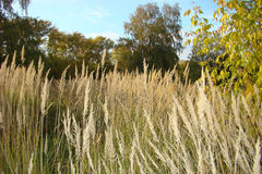 Herbstfeld, überwucherte Graskrautige pflanze Stockbild