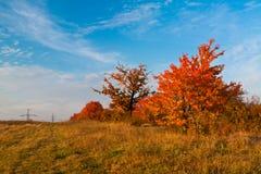 Herbstfeld Lizenzfreie Stockfotos
