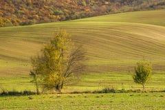 Herbstfeld mit Baum Lizenzfreies Stockfoto