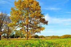Herbstfeld mit gelb gefärbter Eiche - klare sonnige Landschaft Stockbild