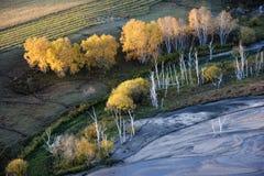 Herbstfeld mit Strom und goldenen Suppengrün Lizenzfreies Stockfoto