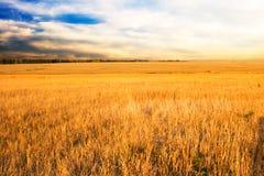 Herbstfeld und -sonnenuntergang Lizenzfreie Stockfotografie