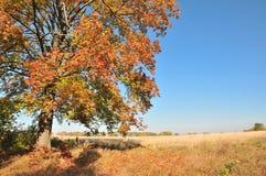 Herbstfelder. Stockfotografie