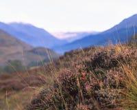 Herbstfelder Lizenzfreie Stockfotografie