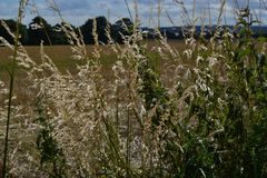 Herbstfelder, sonniger aaftternoon Weg lizenzfreie stockfotografie