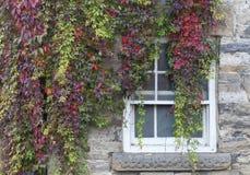 Herbstfenster Stockbild