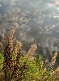 Herbstflußhintergrund Stockfoto