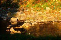 Herbstflußufer Stockbild