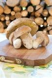 Herbstfrüchte des Holzes Lizenzfreie Stockfotografie