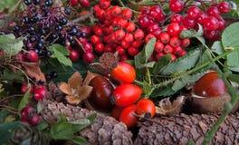 Herbstfrüchte und -muttern Stockfotos