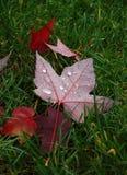 Herbstfrische lizenzfreies stockfoto