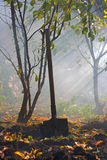 Herbstgartenarbeit Stockbild