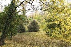 Herbstgasse an am botanischen Garten Stockfotografie